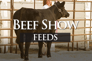 Show Cattle Feed